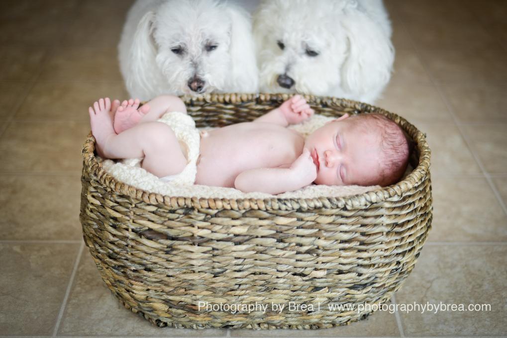 cleveland-oh-newborn-photographer-1-12