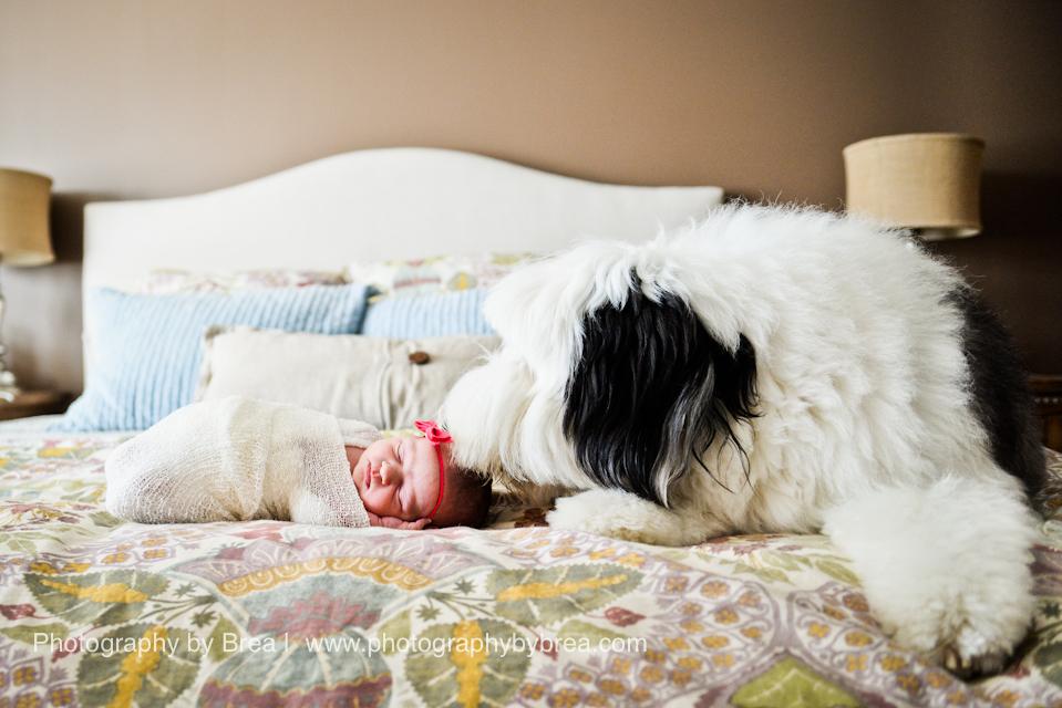 hudson-oh-newborn-photographer-1-4